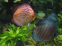 akwarium z rybami